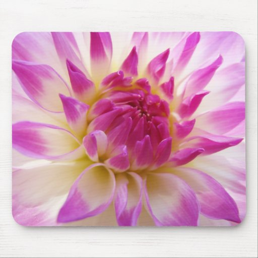 Dahlia Flowers mousepad Colorful Pink White Floral