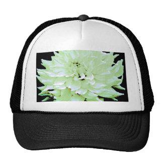 Dahlia - Honeymoon Trucker Hat