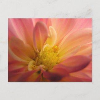 Dahlia Inside Postcard postcard