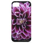 Dahlia iPhone Case iPhone 5 Covers