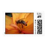 Dahlia (orange) stamp
