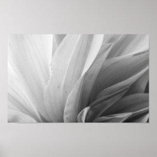 Dahlia Petals Black and White Poster