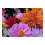 Dahlia Petals Mothers Day Greeting Card