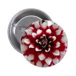 Dahlia Pinback Button