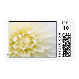 Dahlia Postage Stamp
