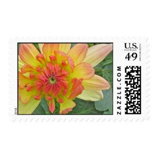 dahlia postage stamps
