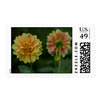 """Dahlia's """"Looking Out"""" Postage Stamp"""