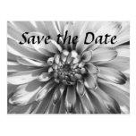 dahlia Save the Date Postcard
