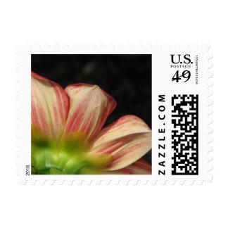 Dahlia Scarlet Stamp