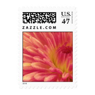 Dahlia Small Postage Stamp