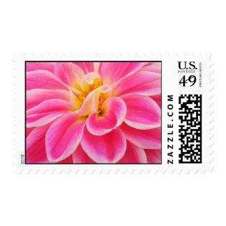 Dahlia Stamps