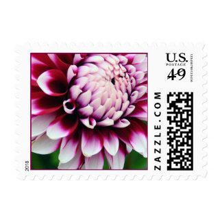 Dahlia with Red Stripes Postage
