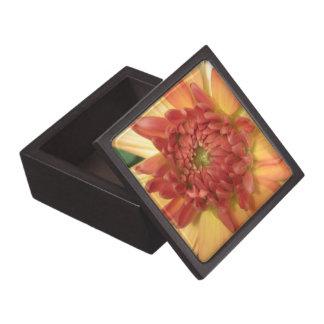 Dahlia: Yellow and salmon --- Gift Box