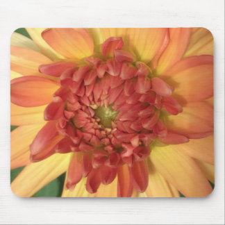 Dahlia: Yellow and salmon --- Mouse Pad