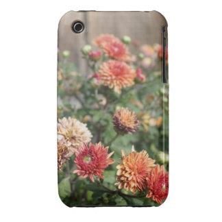 Dahlias Floral Photograph iphone Case