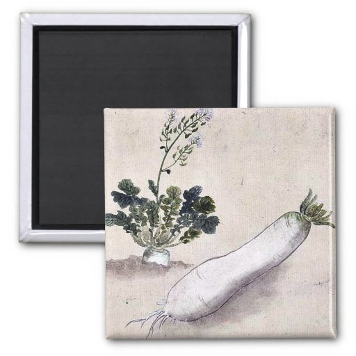 Daikon radish with plant growing 2 inch square magnet