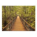 Daintree National Park (UNESCO World Heritage Postcards