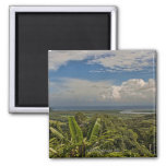 Daintree River in the tropical rainforest of 2 Inch Square Magnet