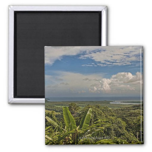Daintree River in the tropical rainforest of Refrigerator Magnets