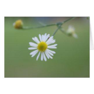 Dainty Daisy Cards