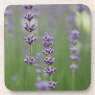 Dainty Lavender Beverage Coaster
