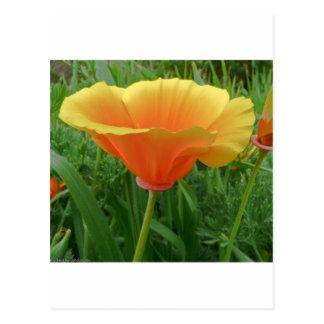 Dainty Orange Posie Postcard