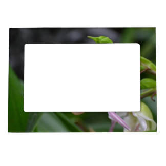 Dainty Orchids Picture Frame Magnet