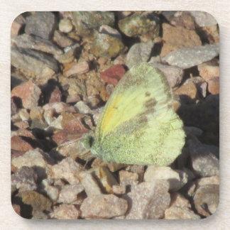 Dainty Sulphur Butterfly Coasters