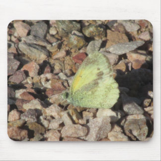 Dainty Sulphur Butterfly Mouse Pad