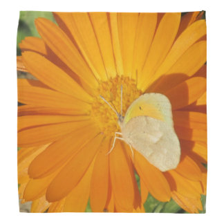 Dainty Sulphur Butterfly on Golden Flower Bandana