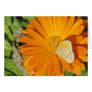 Dainty Sulphur Butterfly on Golden Flower Card