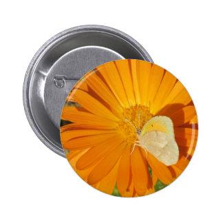 Dainty Sulphur Butterfly on Golden Flower Pinback Button