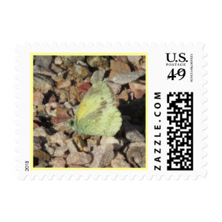 Dainty Sulphur Butterfly Postage Stamps