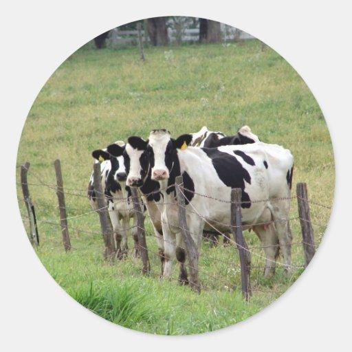 Dairy Cattle Classic Round Sticker