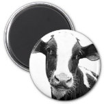 Dairy Cow - Black and White Dairy Calf Magnets