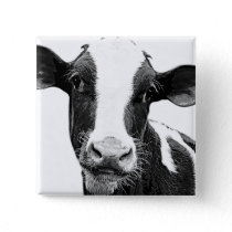 Dairy Cow - Black and White Dairy Calf Pinback Button