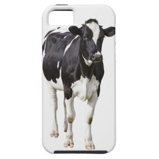 Dairy cow (Bos taurus) on white background iPhone SE/5/5s Case