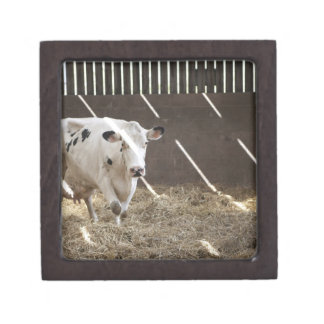 Dairy cow gift box