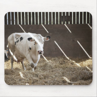Dairy cow mouse pad