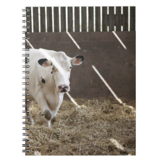 Dairy cow notebook