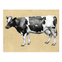 Dairy Cow Postcard