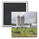 Dairy cows and farm near Taylor County 2 2 Inch Square Magnet