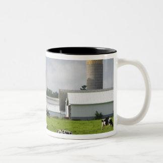 Dairy cows and farm near Taylor County 2 Mug