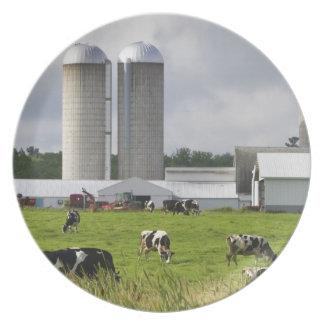 Dairy cows and farm near Taylor County 2 Dinner Plates