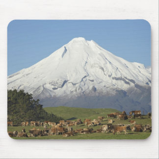 Dairy Cows and Farmland near Okato, and Mt Mouse Pad