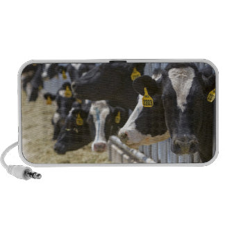 Dairy cows at a feedlot in Grandview, Idaho. Travel Speaker