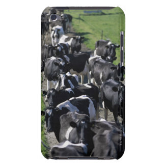 Dairy cows awaiting milking iPod touch case