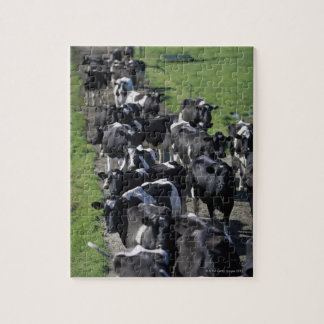 Dairy cows awaiting milking jigsaw puzzle