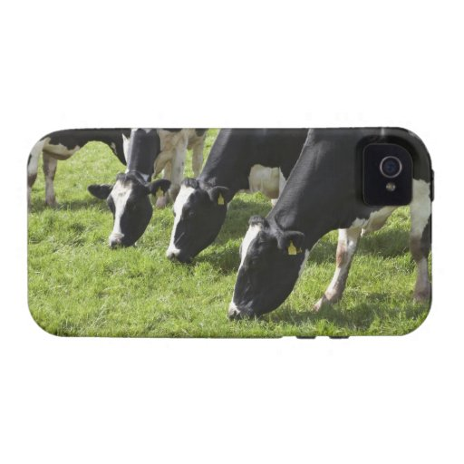 Dairy cows grazing in pasture Case-Mate iPhone 4 cases
