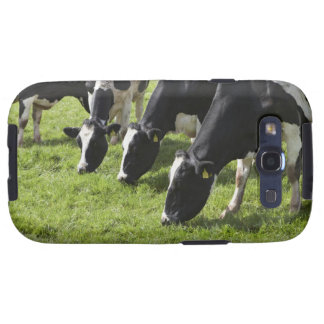 Dairy cows grazing in pasture samsung galaxy SIII cover